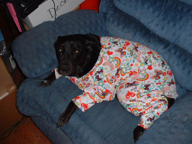 Pajamas For Big Dogs - BigDog-Boutique