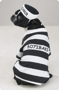 Dog Prisoner Costume