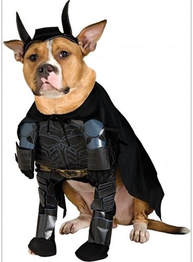 Dog Batman Dark Knight Costume
