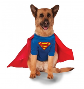 Big Dogs' Superman